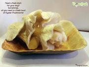 Oyster Mushrooms | veganfresh.in